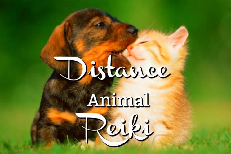 Distance Animal Reiki